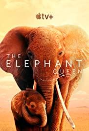 The Elephant Queen  อัศจรรย์ราชินีแห่งช้าง